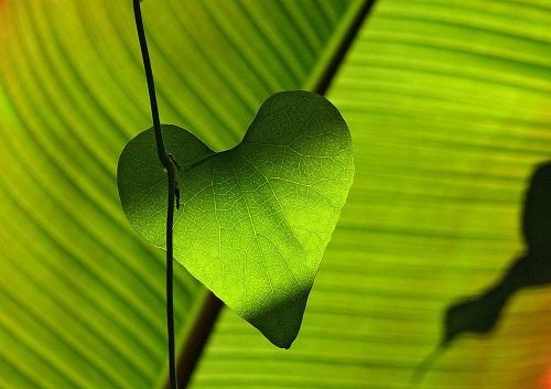 green leaf heart