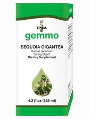 Sequoia Gigantea - 125 ml