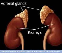 Adrenal Support Bundle Ultra