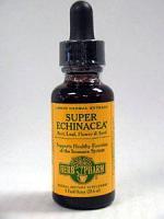 Super Echinacea