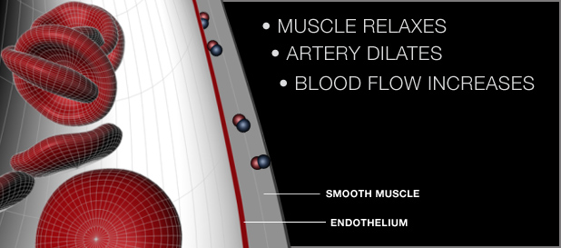 Improve circulation and blood flow with nitric oxide